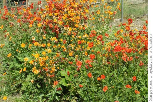 Гравилаты, фото сайта foragefor.blogspot.com