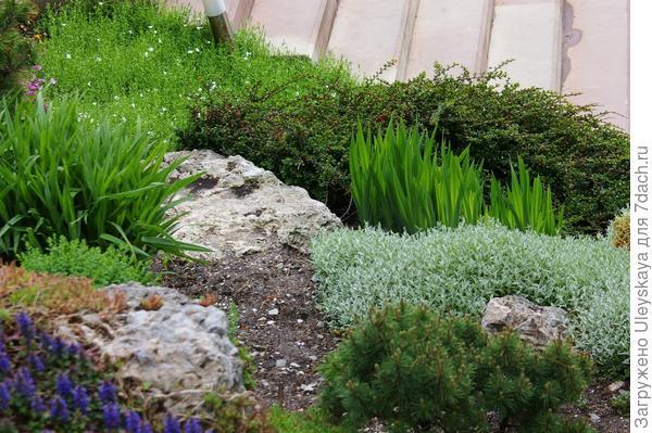 Растительная композиция в рокарии, фрагмент