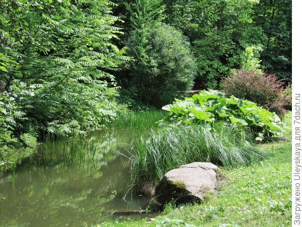 Растительная композиция у водоема