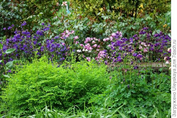 Фрагмент композиции непрерывного цветения
