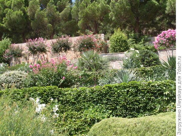 В композиции террасированного сада каждое растение играет свою роль