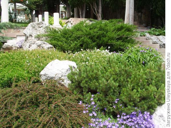 Идеальные растения в рокарии