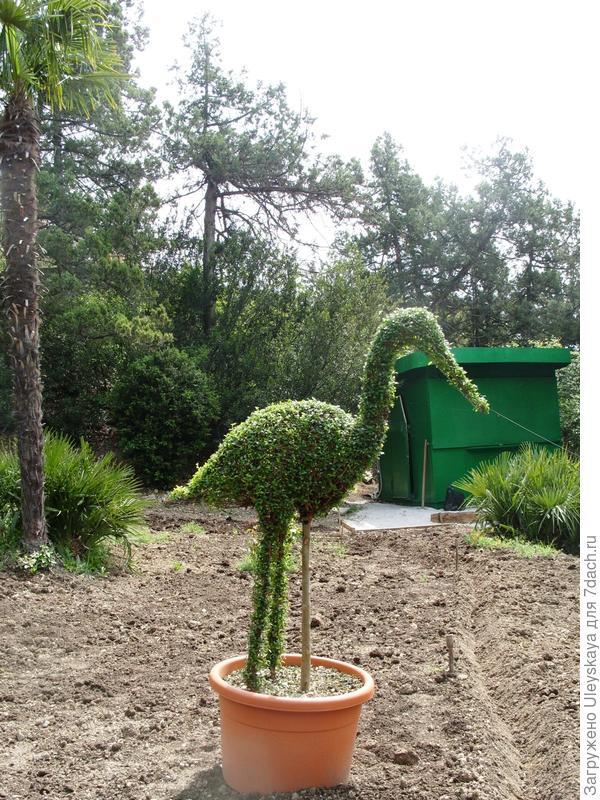 Зеленая цапля