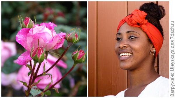 Полиантовая роза сорт Кубиночка и кубинка, фото сайта extrip.ru