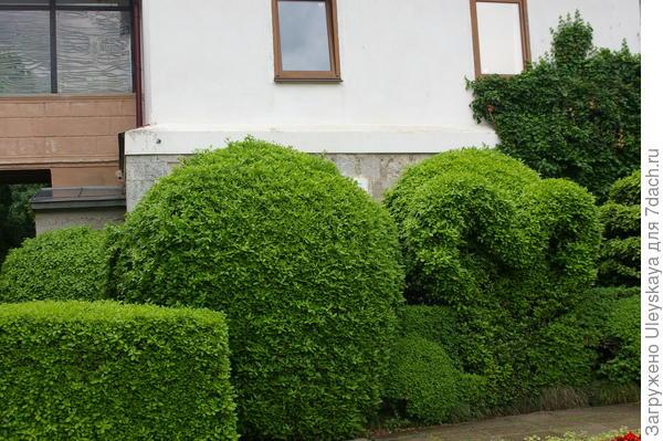 Топиарные формы