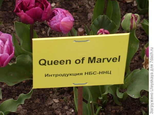 Queen of Marvel