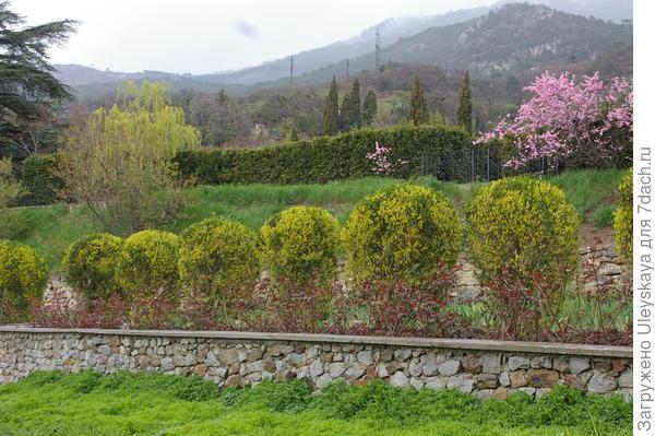 Эта же изгородь в апреле, фото автора