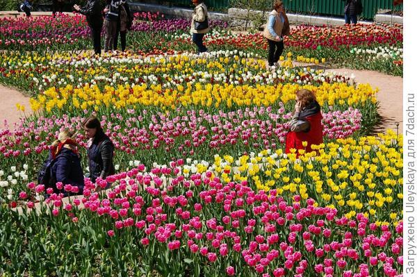 Вдыхаем медовый аромат махровых тюльпанов и наслаждаемся красотой