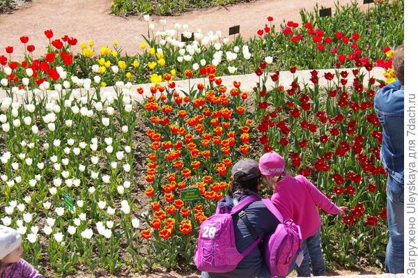 Любуемся тюльпанами вместе с мамой