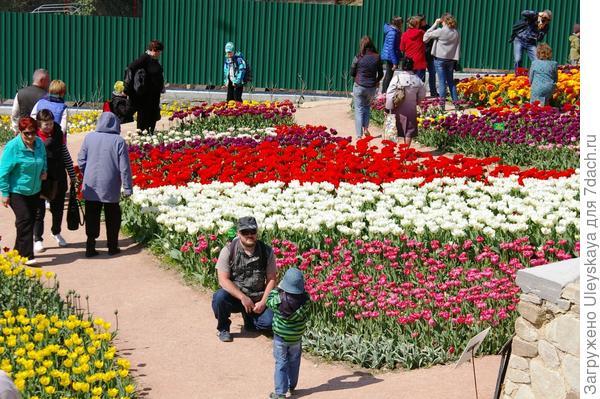 Фоторгафируем папу в тюльпанах