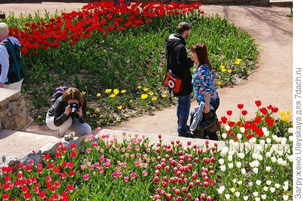 Девушка с фотоаппаратом и тюльпанами