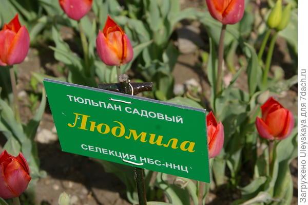 Наш с вами именной сорт, создан тоже Людмилой - Людмилой Максимовной Александровой