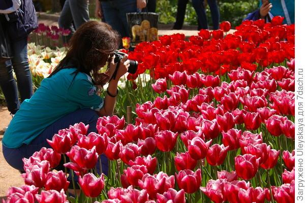 Выставочный участок - парад тюльпанов в Никите, Крым, фото автора