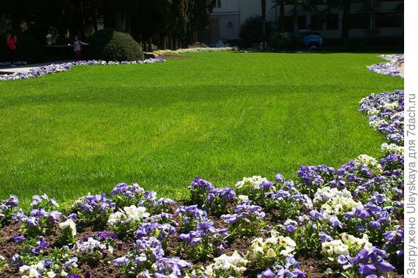 Весенний газон в апреле, фото автора
