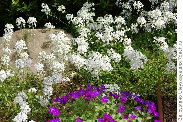 Мини-композиция апреля, фото автора