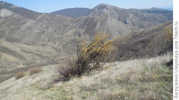Нереальные пейзажи Зеленогорья