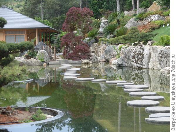 Краснолистный клен в японском саду, фото автора