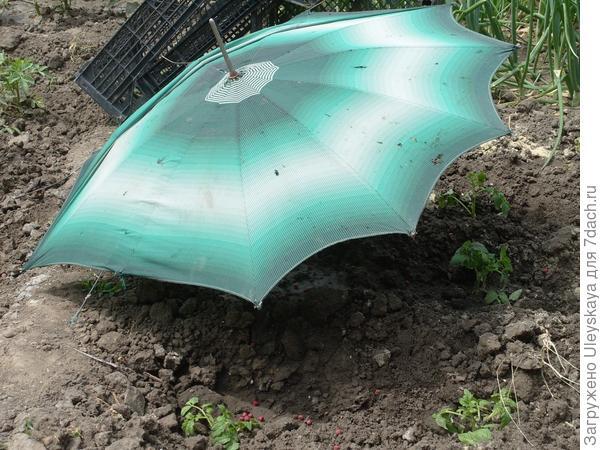 Притенение старым зонтиком