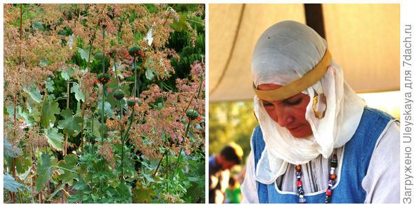 Маклейя мелкоплодная, фото автора. Четвертая красавица фестиваля, фото автора