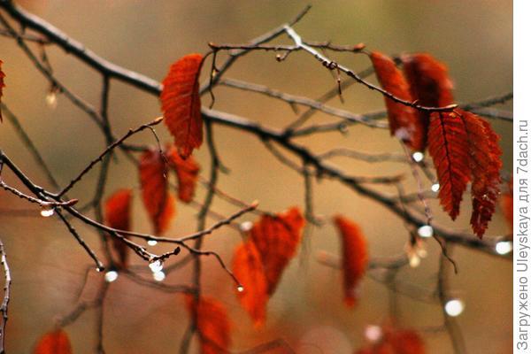 Осень, фото автора