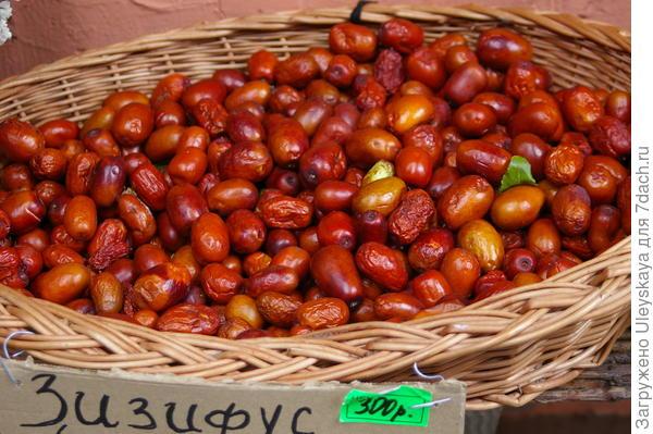 Плоды зизифуса, фото автора