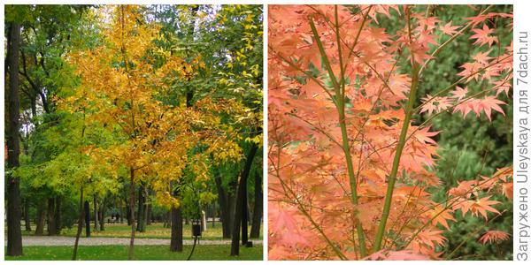 Осенние клены, фото автора