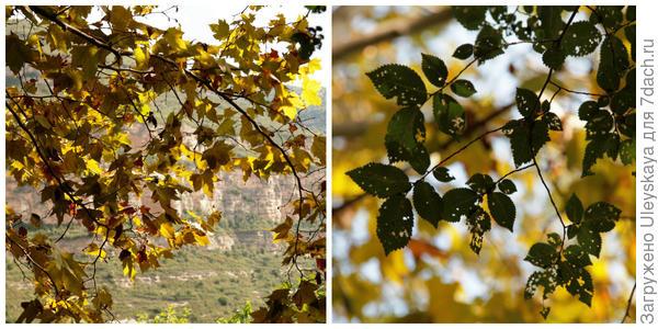Осень рисует желтым цветом, фото автора