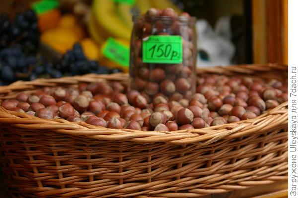 Орехи лещины, фото автора
