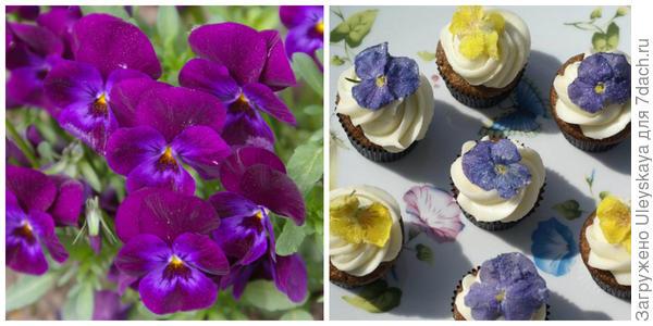 Фиалка Виттрока, фото автора. Цветки на кексах. Фото с сайта bolshoyvopros.ru