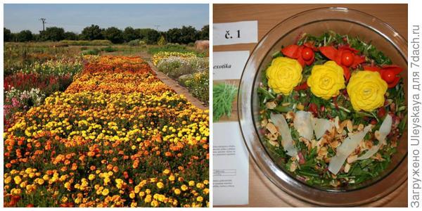Выращивание цветов и для кулинарии в том числе. Салат, украшенный розами, фото чешских коллег
