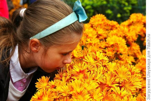 Наша Лиечка и хризантемы, фото автора