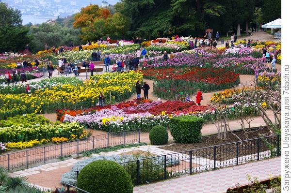 64-й осенний бал хризантем в Никите, фото автора