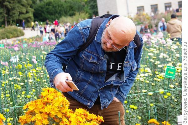 Мужчина и хризантема