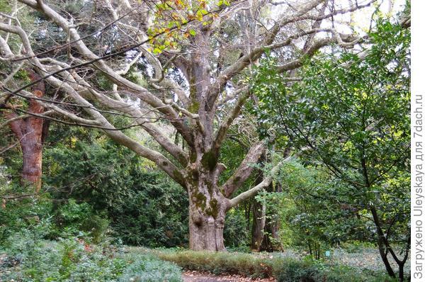 Декоративная кора всех цветов: деревья и кустарники Никитского ботанического сада