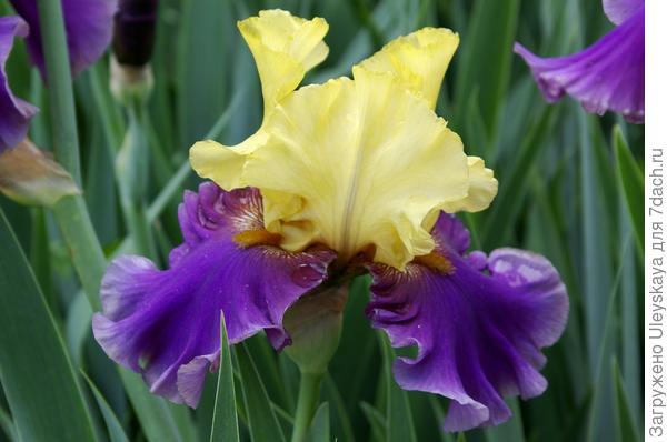 Отдельный цветок крупным планом