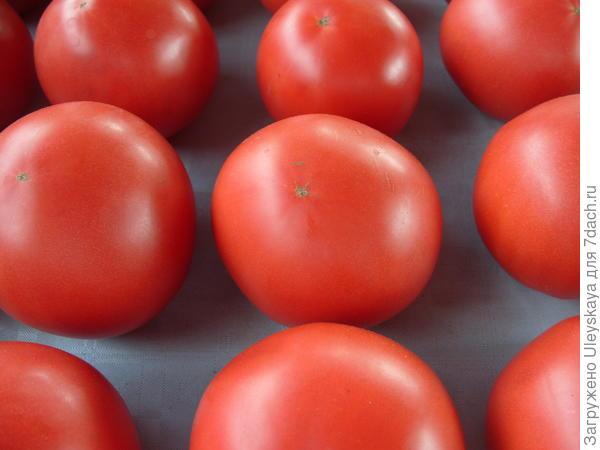 Розовые томаты, фото автора