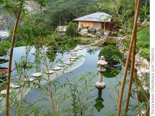 Золотистый бамбук в Японском саду, фото автора