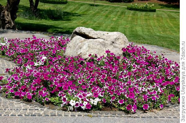 Камень и петуния в античном саду