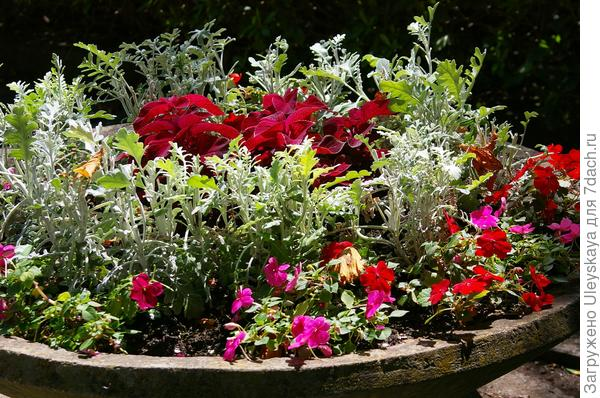 Композиция в широком садовом вазоне
