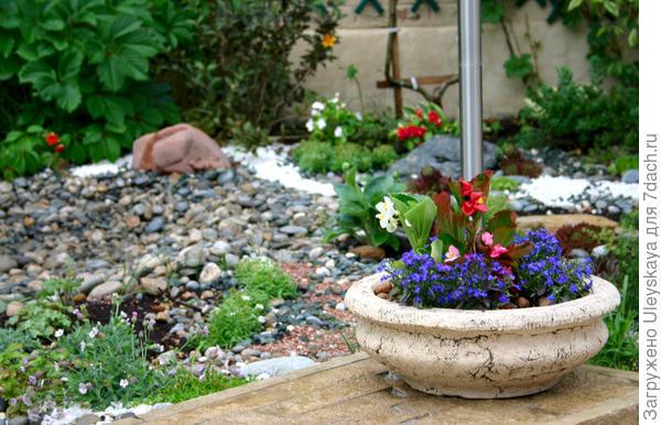 Бегония вечноцветущая в стационарной садовой вазе
