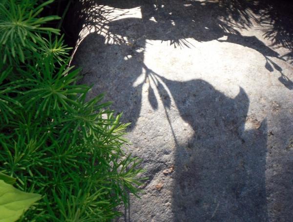 Тени на камнях