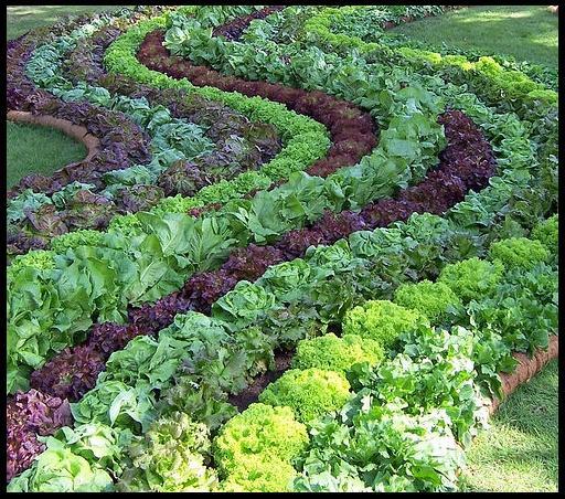 Овощная клумба