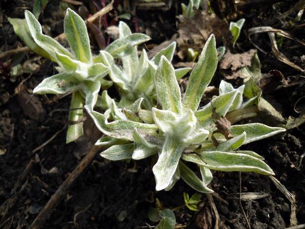 Еще одно неизвестное растение