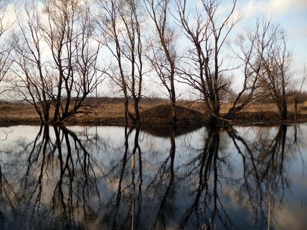 Отражения деревьев в пруду