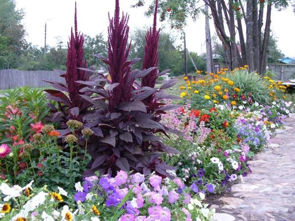 Миксбордер с высокими растениями