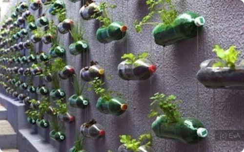 Мини-грядки из пластиковых бутылок