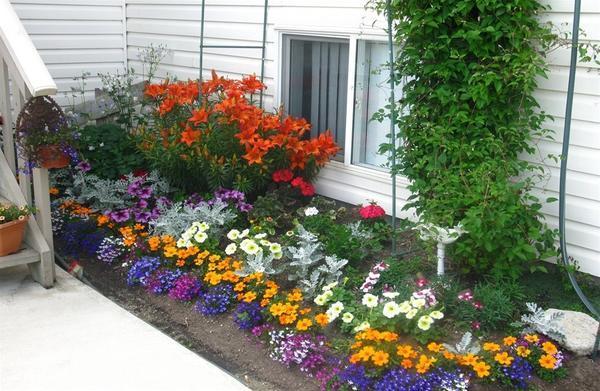Цветы в маленьком палисаднике