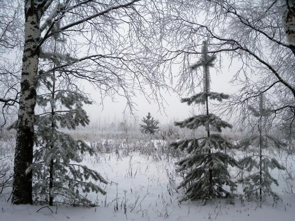 Деревья под первым снегом