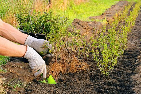Сезонные работы в саду и огороде: вторая неделя декабря