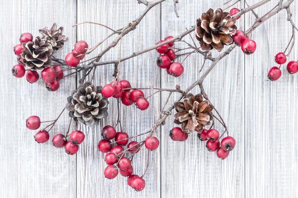 Ветки с ягодами и шишки